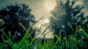 Nature - tress and grass - Creative Commons attribution-free licensing